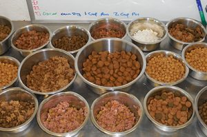 Cow Hill Kennels Dog Nutrition