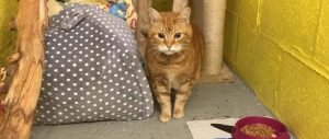 Cow Hill cattery