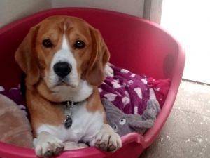 Lancashire dog day care