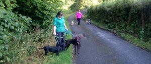 Doggy Day Care Preston, Lancashire